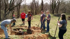 Mission Madness folks removing a stump at the Urban Farm
