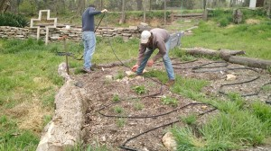 Laying irrigation lines at the Urban Farm