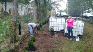Planting boxwoods along the exterior fence line at the Urban Farm